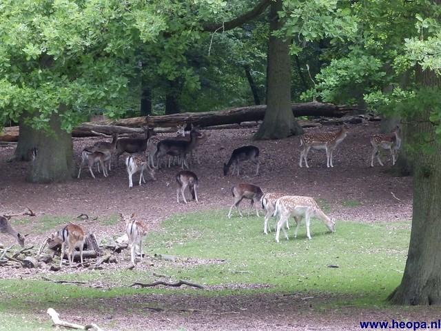 01-06-2013 Arnhem 32.05 Km (70)