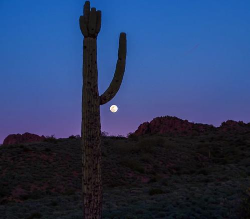 Cactus Moon 1
