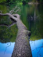 Nationalpark Jasmund: Hertha See