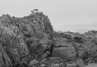 Eigg 89080733 | by james austin (photographer)