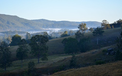 morning trees mist fog landscape countryside australia pasture nsw australianlandscape grazing hillsides northernrivers morninglandscape mackellarrange leycestercreekvalley quiltyroad