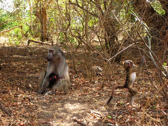 Transition to Madagascar041