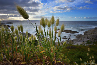 Grasses on the shore | by Sumarie Slabber