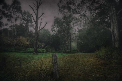 fog forest landscape bush brassall
