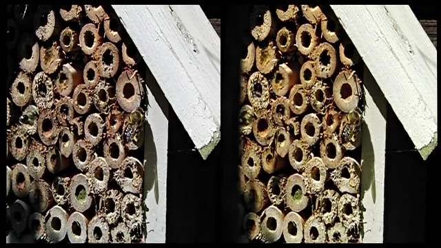 Home of Bees - 3d high speed movie clip -  crossview