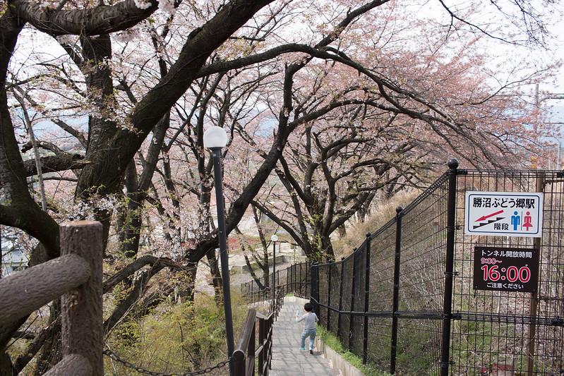 20150412-甲州高尾山-0636.jpg
