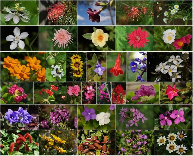 ONE DAY flowers in MY GARDEN (Spring in Autumn)