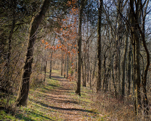family people unitedstates trails missouri springfield andi greenecounty