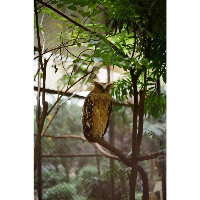 This Is Fakyu The Owl. He's One Of Kebun Binatang Bandung