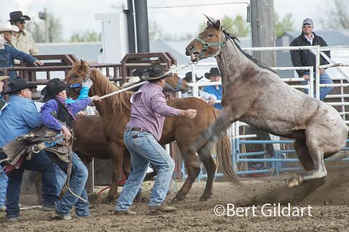 Bull Riders-1 | by gildartphoto