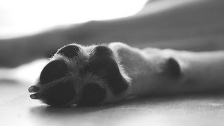 Paw | by hasor
