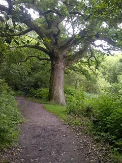 IMG-20140623-00385 1.7 oak on path