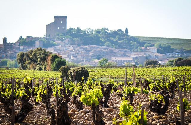 Chateauneuf du Pape, vineyard