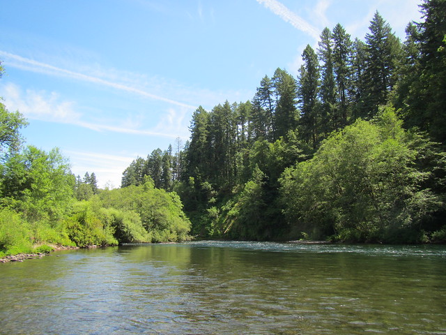 mckenzie river fly fishing summer