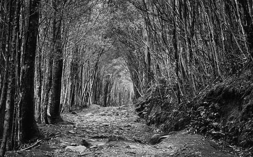 path track trail mtwellington kunanyi trees forest tasmania
