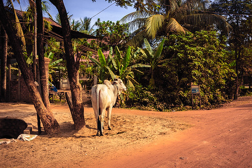 Rural Cambodia | by Gypsy on a journey