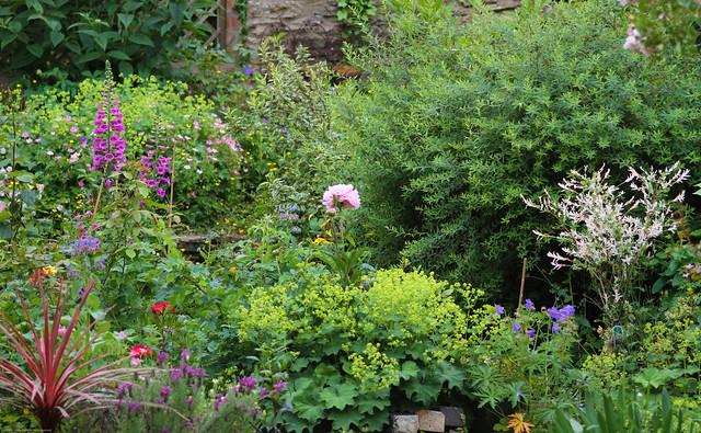 A snapshot from my garden