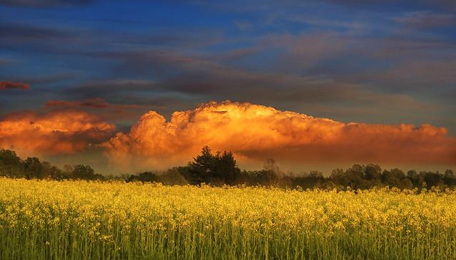 IMG_5015 The orange cloud