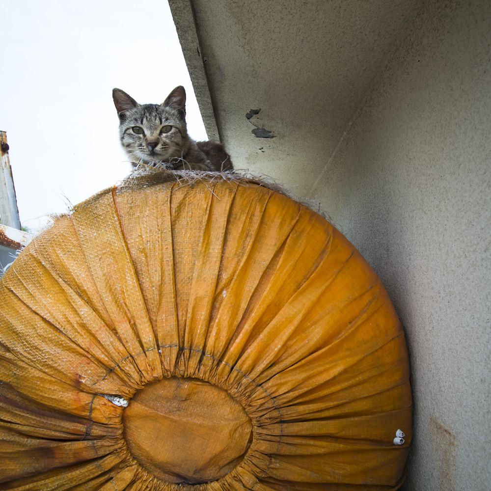 "Cat Island ""Aoshima"""