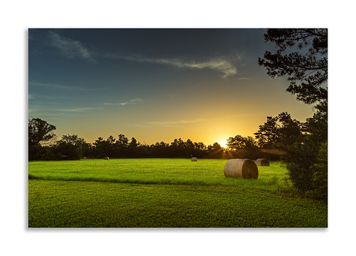 morning trees sun field grass sunrise landscape dawn texas unitedstates straw round flare sunburst hay bales tomball