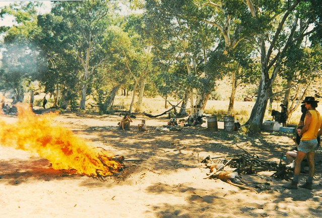 Cooking the kangaroos