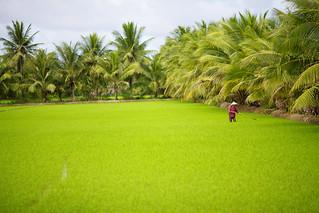 VietNam   by WLE_CGIAR