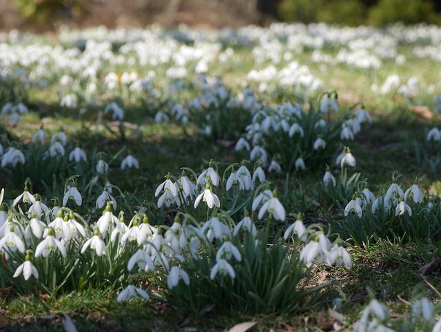 火, 2014-04-01 13:36 - Brooklyn Botanic Garden