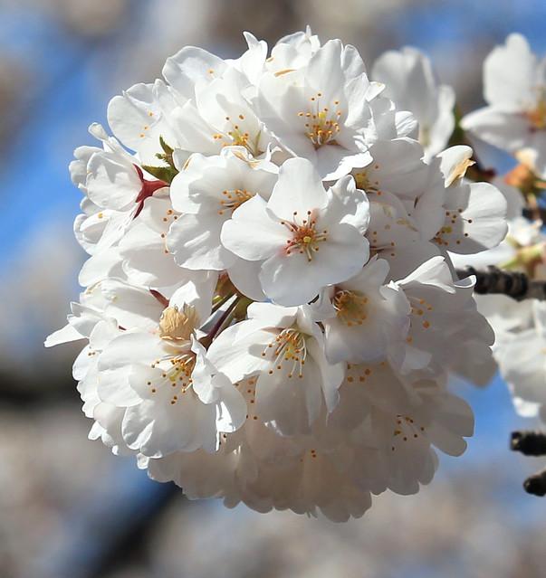 Spring Bunch