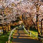 Tafusegawa Bike Path, Saga, Japan 佐賀市の多布施川自転車道