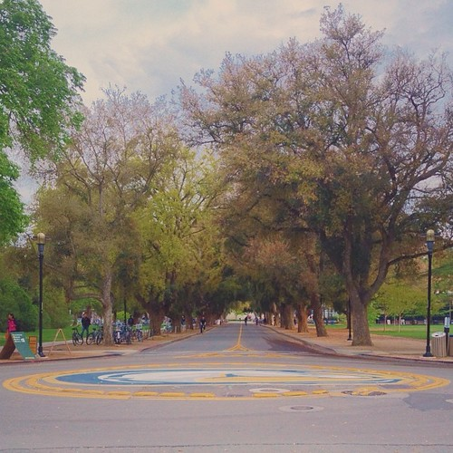 Tree Lined UC Davis Streets :: Just before the rain came in, I got to spend a little time out on Davis' #campus. As much as I enjoy living in the bay, I do miss #biking around those #tree lined #paths. | by Peter Alfred Hess