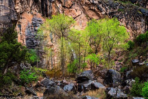 Spring Trees | by IntrepidXJ