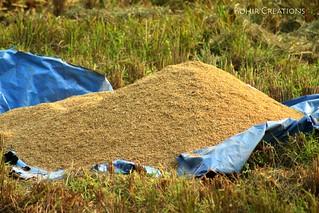 Grains   by Rohir Creations
