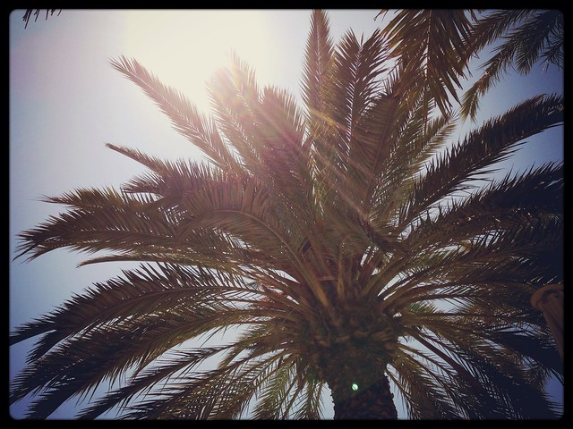 Sunshine & Palm Tree