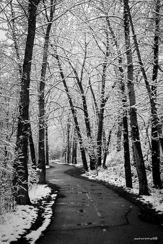 trees winter blackandwhite bw snow canada calgary canon walking path alberta grayscale bnw winterwonderland winterlandscape wolderland