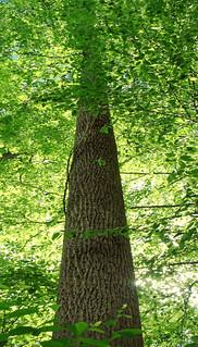 Texter Mountain Nature Preserve (Revisit) (12)   by Nicholas_T