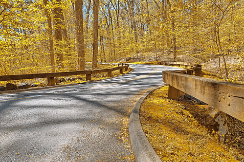 Gold Forest Road | by Bold Frontiers