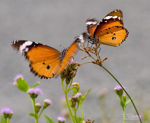 phamvanhuong danceofbutterfly vũđiệucủabướm uyênươnghồđiệp khoảnhcủaphạmvănhương
