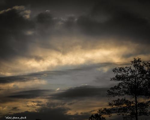 nature clouds tree sunrise dawn