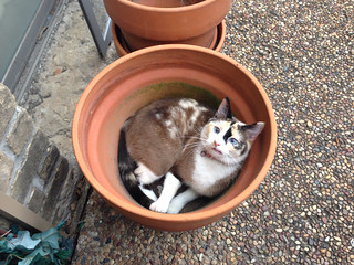 Pot full of cat | by I am R.