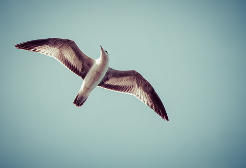 Gull | by gshappell