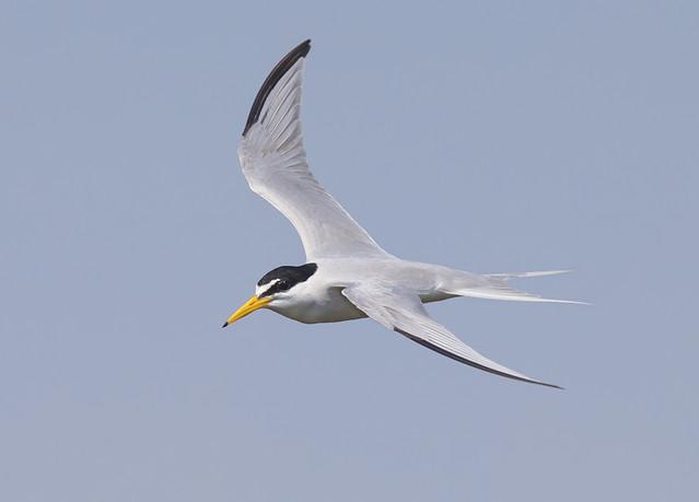 Not new, but a mighty good bird!