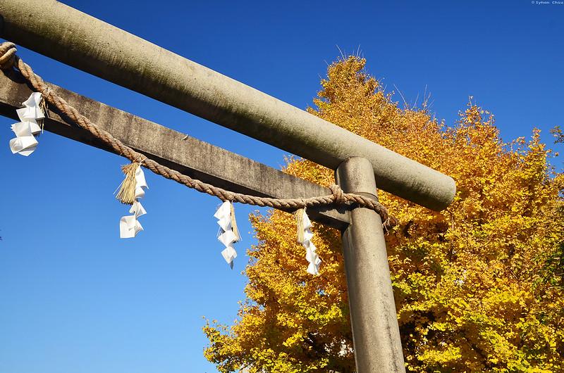 浅草神社 | Asakusa Shrine