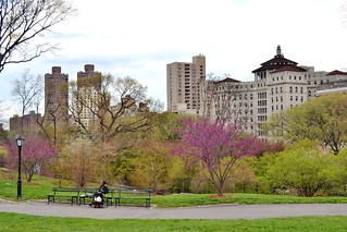 Central Park-East Meadow, 04.26.14 | by gigi_nyc