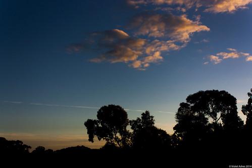 sunset silhouette canon sunsets australia southaustralia gawler canonphotography sunsetphotography canoneos450d sunsetaday violetashessunset corpril violetashessunsettumblrcompost87190059089sunset149