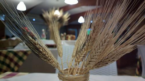 Wheat bussels
