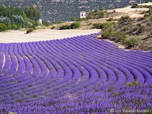 campos de La Alcarria