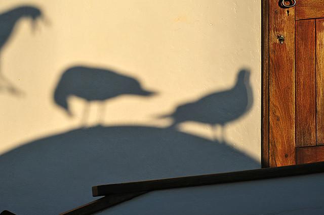 shadow play . . .