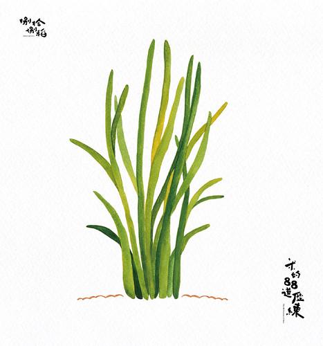 34 稻子分蘗期 Tiller