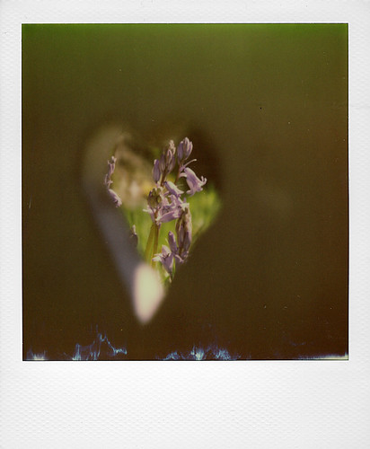 Hyacinth ... | by @necDOT