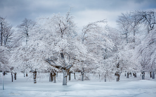 Trees covered in ice from the frozen mist of Niagara Falls | by Phil Marion (176 million views - THANKS)
